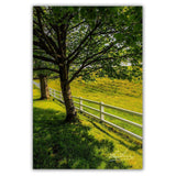 Ballynacally Spring Meadow Irish Poster Print Poster Moods of Ireland