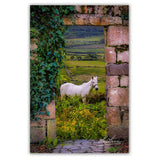 Horse in the Irish Countryside, Irish Art Poster Poster Moods of Ireland
