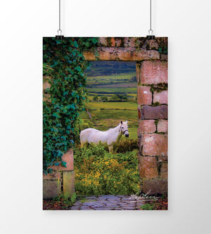 Horse in the Irish Countryside, Irish Art Poster