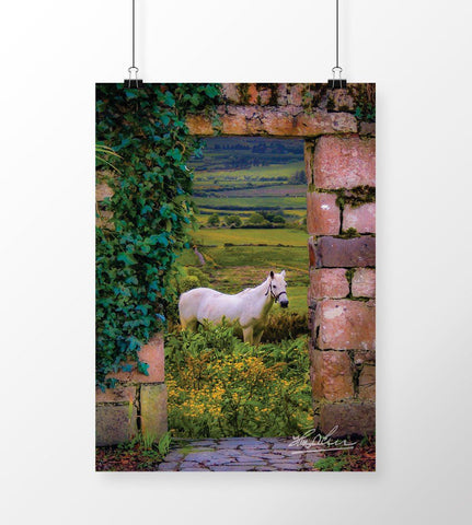 Image of Horse in the Irish Countryside, Irish Art Poster