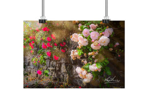 Flower Art Mindfulness Gift Roadside Irish Roses Poster Print Poster Moods of Ireland