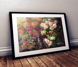 Flower Art Mindfulness Gift Roadside Irish Roses Poster Print
