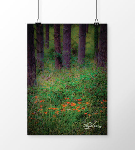 Image of Portumna Forest Park Paradise in County Galway, Ireland Poster Poster Moods of Ireland
