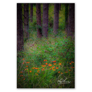 Print - Portumna Forest Park Paradise in County Galway - James A. Truett - Moods of Ireland - Irish Art