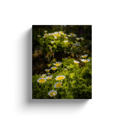 Canvas Wraps - Blooming Poached Egg Irish Wildflowers Canvas Wrap Moods of Ireland
