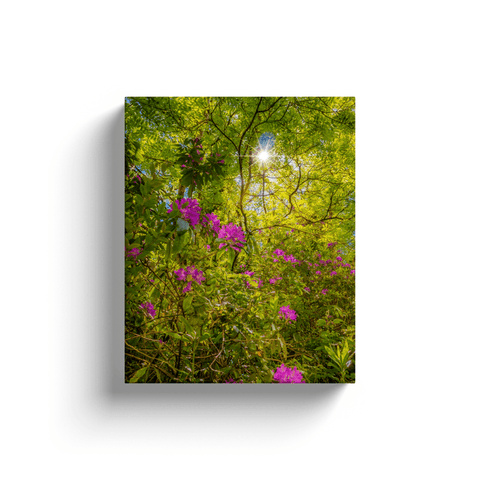 Canvas Wraps - Sun rays and Rhododendrons in Paradise, County Clare Canvas Wrap Moods of Ireland