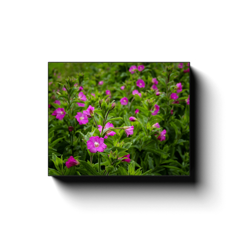 Image of Canvas Wrap - Great Willowherb Blossoms in the Irish Countryside - James A. Truett - Moods of Ireland - Irish Art