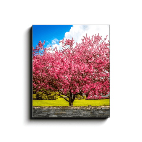 Canvas Wrap - Cherry Blossom Explosion, Ennis, County Clare - James A. Truett - Moods of Ireland - Irish Art