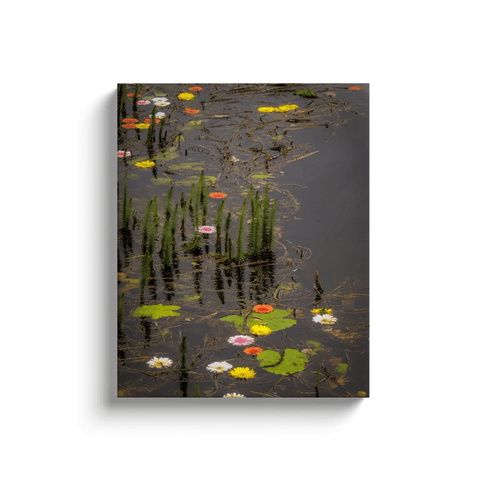 Image of Canvas Wrap - Water Flowers at Markree Castle, County Sligo Canvas Wrap Moods of Ireland 16x20 inch