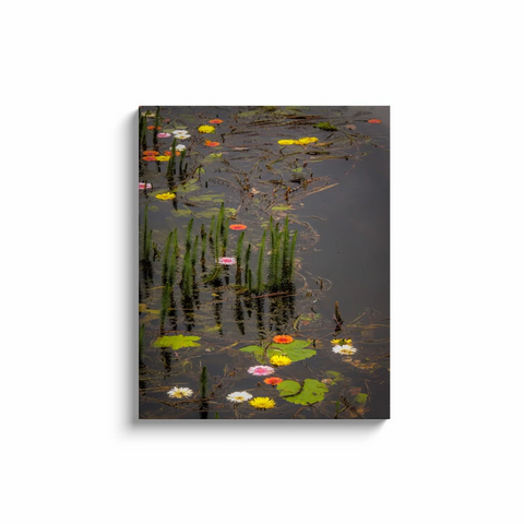 Image of Canvas Wrap - Water Flowers at Markree Castle, County Sligo Canvas Wrap Moods of Ireland 24x30 inch