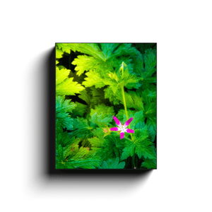 Canvas Wrap - Wildflower in Greenery, Tulla, County Clare - James A. Truett - Moods of Ireland - Irish Art