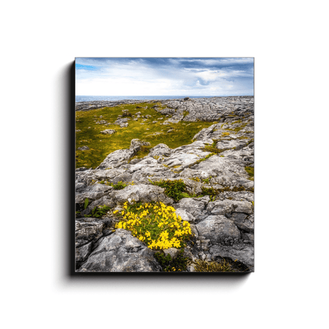 Canvas Wrap - Gorse in the Rugged Burren Limestone - James A. Truett - Moods of Ireland - Irish Art