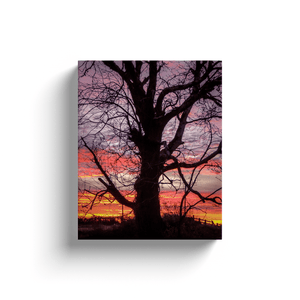 Canvas Wrap - Irish Sunrise and Hibernating Tree Canvas Wrap Moods of Ireland 8x10 inch