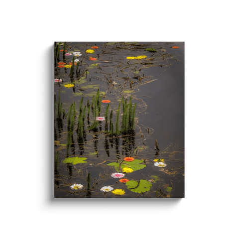 Image of Canvas Wrap - Water Flowers at Markree Castle, County Sligo Canvas Wrap Moods of Ireland 20x24 inch