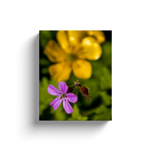 Canvas Wrap - Herb Robert and Buttercup Wildflowers in the Irish Countryside, County Clare - James A. Truett - Moods of Ireland - Irish Art