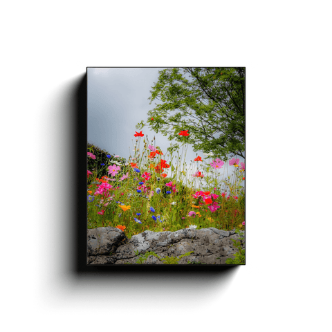 Image of Canvas Wrap - Wildflowers in Limestone Bed, County Clare Canvas Wrap Moods of Ireland 8x10 inch