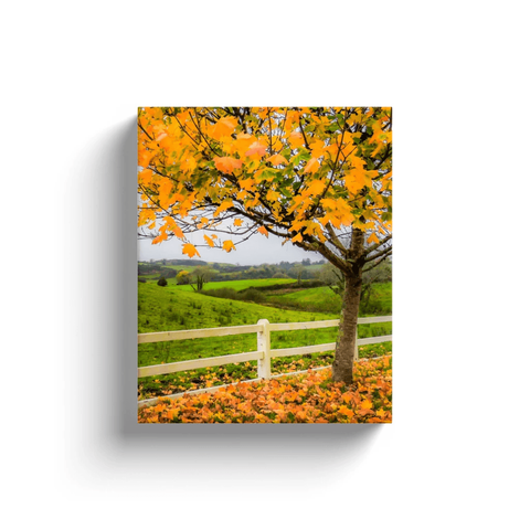Image of Canvas Wrap - Autumn Leaves in Ballynacally, County Clare - James A. Truett - Moods of Ireland - Irish Art