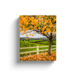 Canvas Wrap - Autumn Leaves in Ballynacally, County Clare - James A. Truett - Moods of Ireland - Irish Art