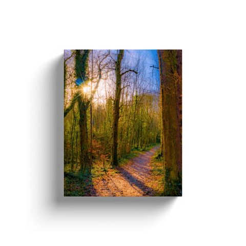 Nature Art Canvas - Autumn Path in Dromore Wood, County Clare Canvas Wrap Moods of Ireland 8x10 inch
