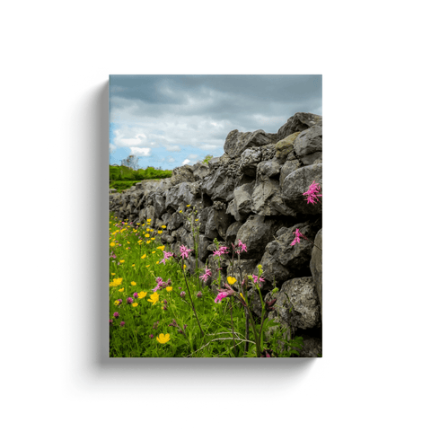 Image of Canvas Wraps - Kildysart Buttercups & Ragged Robin against Stone Wall, County Clare, Ireland Canvas Wrap Moods of Ireland 12x16 inch