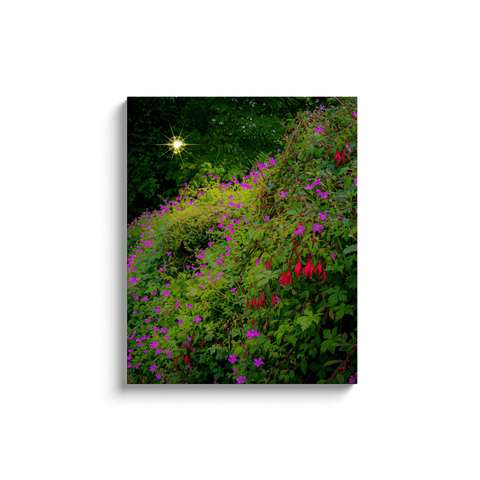 Image of Canvas Wraps - Roadside Irish Wildflower Cascade in Afternoon Sun Canvas Wrap Moods of Ireland 24x30 inch