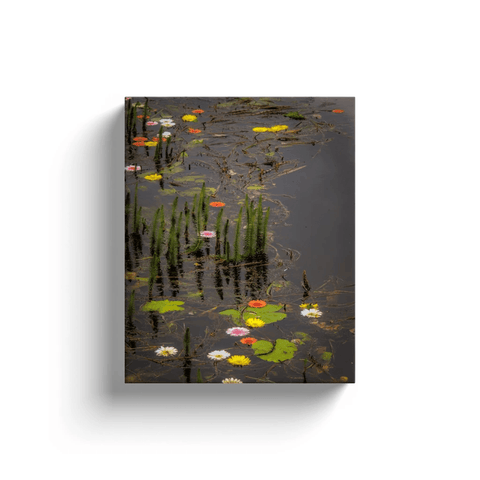 Image of Canvas Wrap - Water Flowers at Markree Castle, County Sligo Canvas Wrap Moods of Ireland 8x10 inch