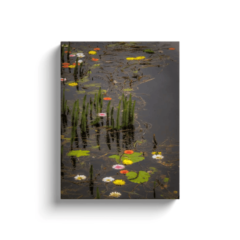 Image of Canvas Wrap - Water Flowers at Markree Castle, County Sligo Canvas Wrap Moods of Ireland 12x16 inch
