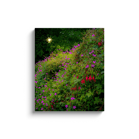 Image of Canvas Wraps - Roadside Irish Wildflower Cascade in Afternoon Sun Canvas Wrap Moods of Ireland 20x24 inch