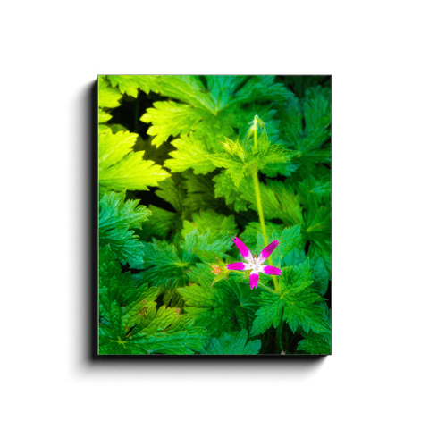 Image of Canvas Wrap - Wildflower in Greenery, Tulla, County Clare - James A. Truett - Moods of Ireland - Irish Art