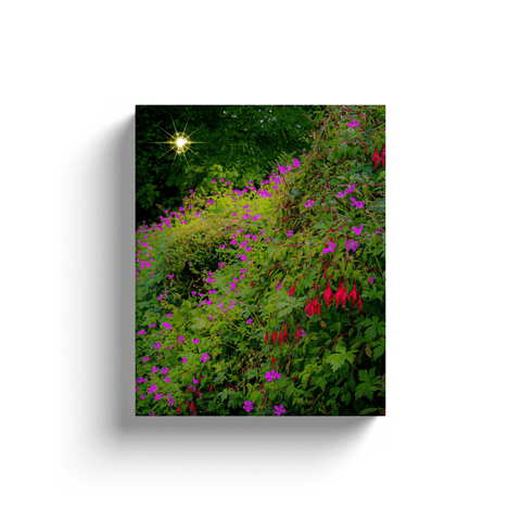 Image of Canvas Wraps - Roadside Irish Wildflower Cascade in Afternoon Sun Canvas Wrap Moods of Ireland 8x10 inch