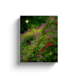 Canvas Wraps - Roadside Irish Wildflower Cascade in Afternoon Sun Canvas Wrap Moods of Ireland 8x10 inch
