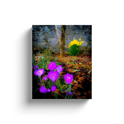 Image of Canvas Wrap - Rebirth of Irish Spring Wildflowers Moods of Ireland 8x10 inch