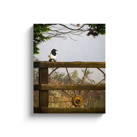 Image of Canvas Wrap - Magpie in the Irish Mist, County Clare - James A. Truett - Moods of Ireland - Irish Art