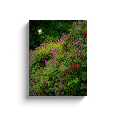 Image of Canvas Wraps - Roadside Irish Wildflower Cascade in Afternoon Sun Canvas Wrap Moods of Ireland 12x16 inch
