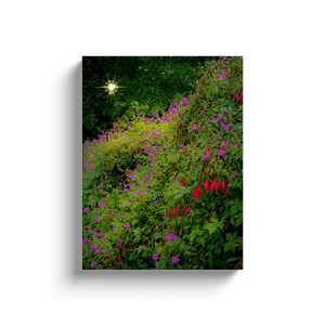 Canvas Wraps - Roadside Irish Wildflower Cascade in Afternoon Sun Canvas Wrap Moods of Ireland 12x16 inch