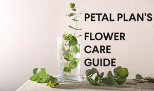 The Petal Plan Flower Care Guide