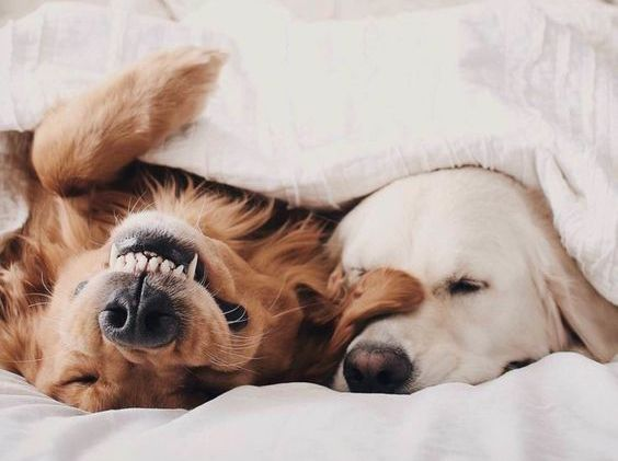 Monday Mood - Pups in Bed