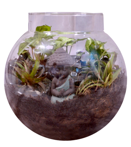HOW TO MAKE BUDDHA TERRARIUM