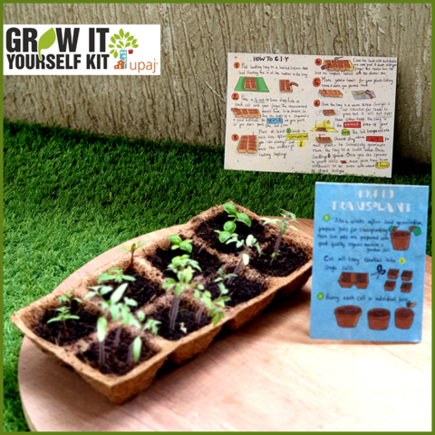 RABI 19.1 VEGETABLE SAPLINGS IN A BIODEGRADABLE COIR SEED STARTUP TRAY