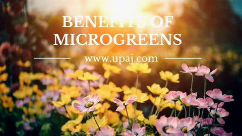 7 Simple Benefits of Microgreens That You Need to Know