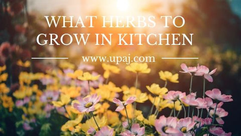 what herbs to grow in kitchen