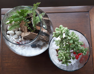 A Workshop All About Terrariums