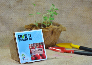 TOMATO SMALL GIY KIT