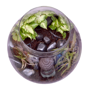 BUDDHA IN A BOWL TERRARIUM KIT