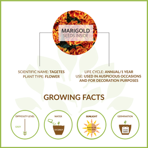 MARIGOLD LARGE GIY KIT