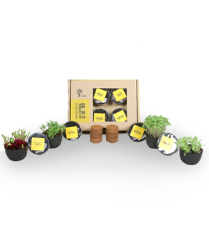 MICROGREENS GIY KIT