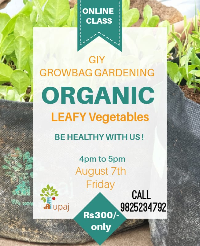Workshop For GIY GROW BAG GARDENING ( August 7th Friday 4:00 PM to 5:00 PM)