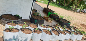 A Workshop For Urban Farmer (July every Thursday 4:00 PM to 5:00 PM)