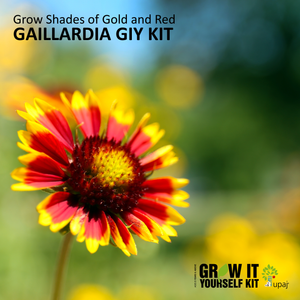 GAILLARDIA SMALL GIY KIT