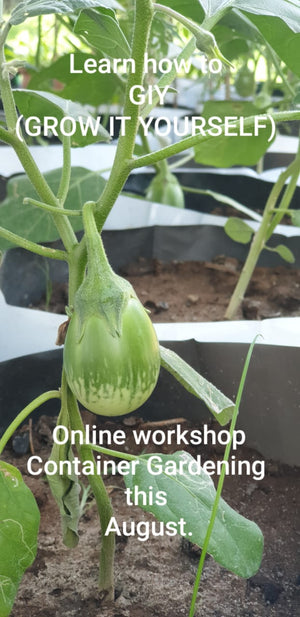 Workshop For Urban Farmer (August every Thursday 4:00 PM to 5:00 PM)